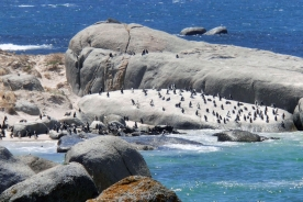 Boulders Beach Cape Town Penguins