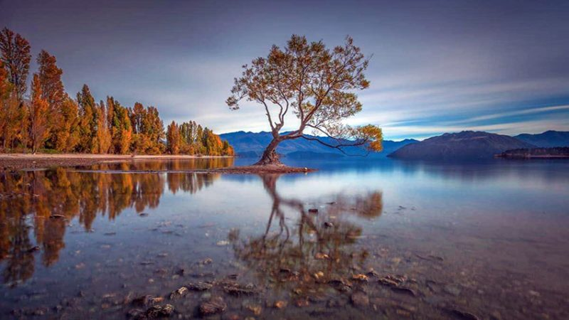 that wanaka tree courtesy of @jayeoz south island new zealand