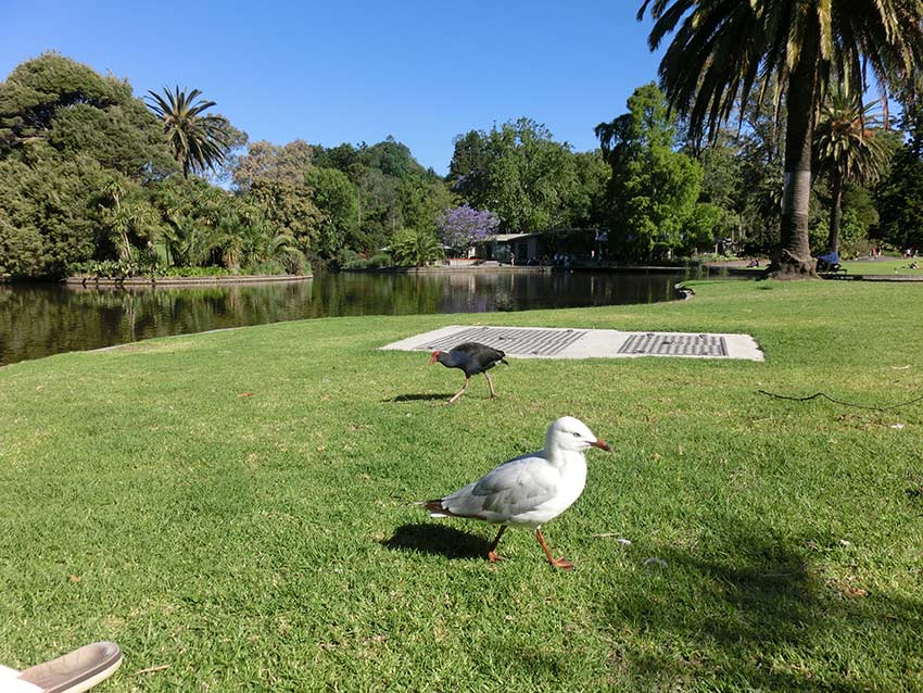 The central lake of the Royal Botanical Gardens Melbourne