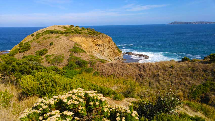 George Bass coastal Walk vegetation and ocean views